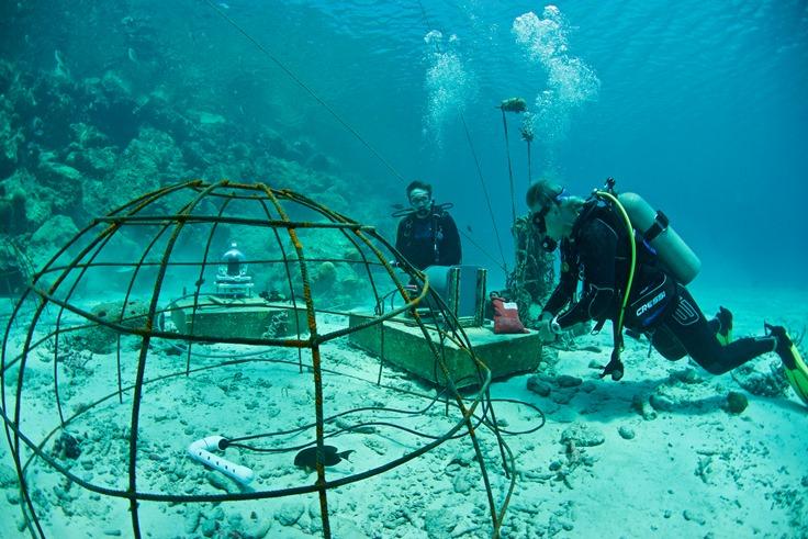 Electrified Reef at Harbour Village Bonaire - kopie